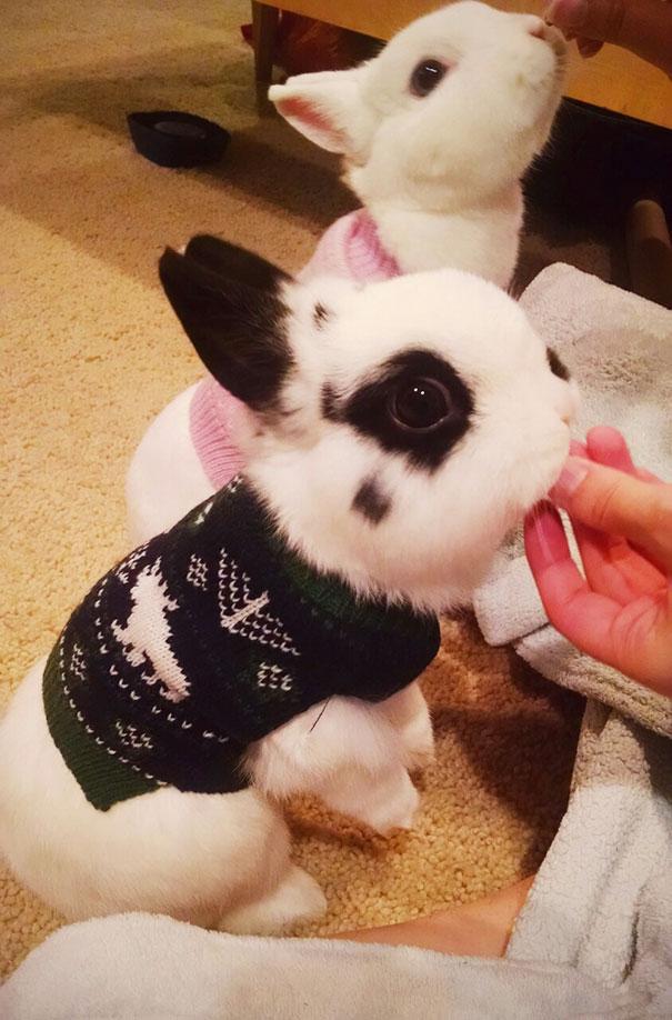 El par de conejos más bonito