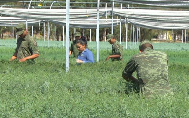 Viveros forestales militares el lado que no conoc as del for Viveros forestales conafor