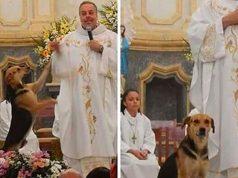 Este sacerdote le busca hogar a perritos de la calle en misa