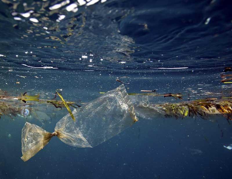 Estudiantes lograron crear una bacteria que convierte el plástico en agua