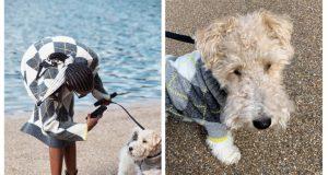 Así es la colección que H&M lanzó para mascotas y sus dueños (+FOTOS)