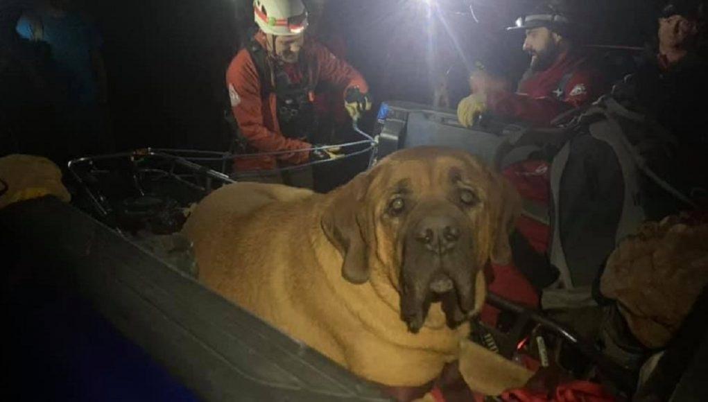 Este perro se cansó de caminar y tuvieron que rescatarlo