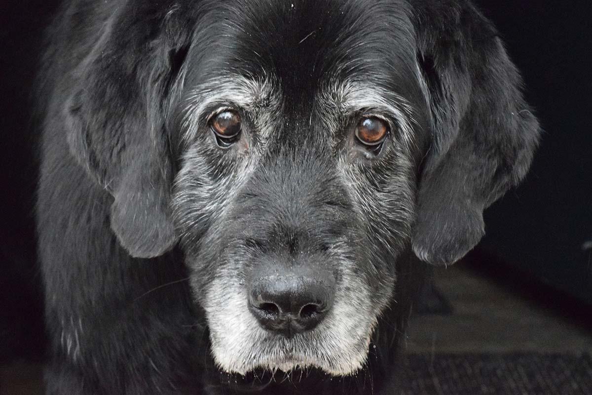 Adiós mitos: aprende a calcular la edad humana de tu perro