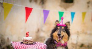 Adiós mitos, te decimos cómo calcular la edad humana de tu perro