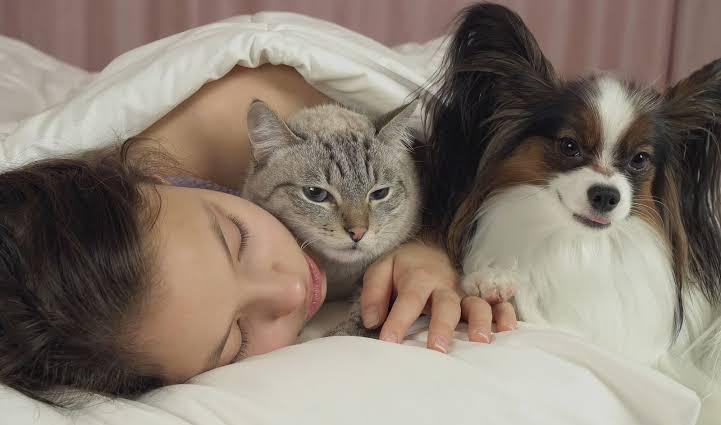 Estudio demuestra que los perros sueñan con sus amos
