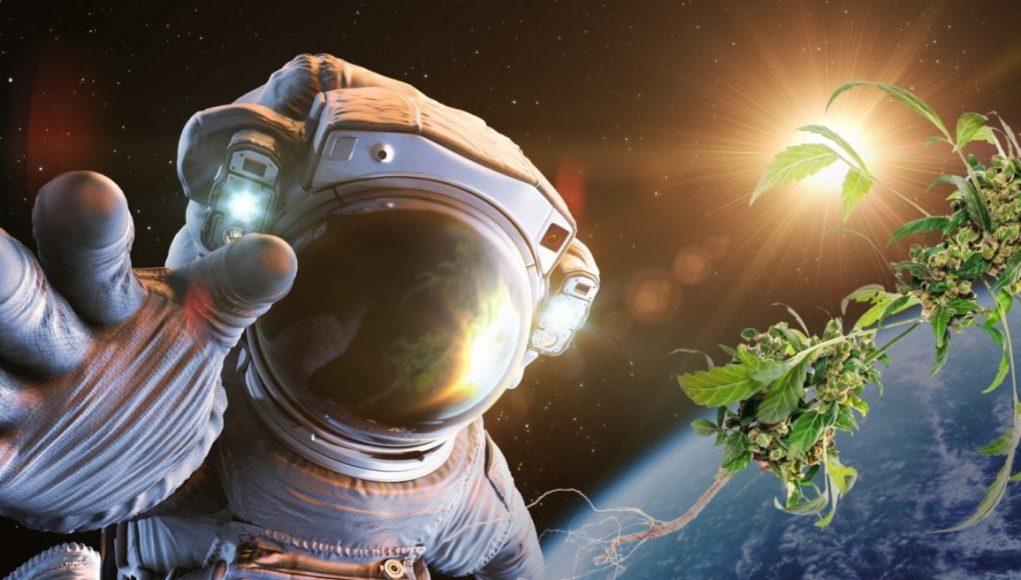 Un grupo de científicos cultivará marihuana en el espacio