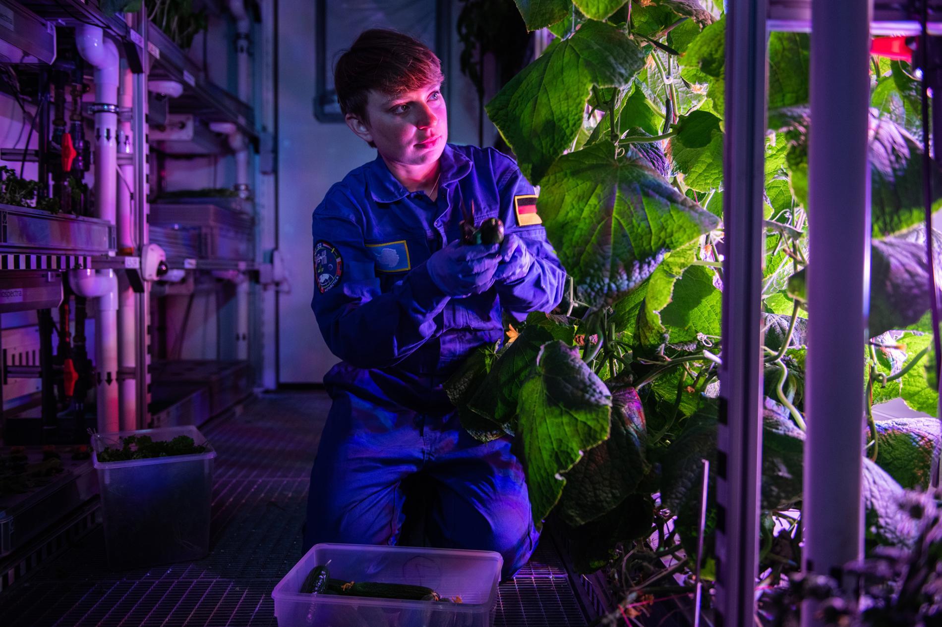 Un grupo de científicos quiere llevar marihuana al espacio