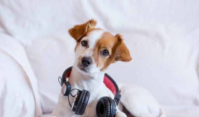 Spotify lanza playlist que relajan a tu mascota